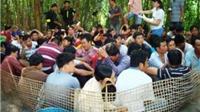 Bắt giữ 51 con bạc trong sới gà vườn dừa tại Tiền Giang
