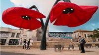 Nhân vụ hoa 'lạ' cạnh Hồ Gươm: Quảng trường ở Jerusalem cũng có hoa 'lạ'