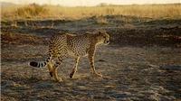 Nam Phi cấm săn báo trong một năm