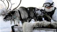 VIDEO: Lính Nga tập trận với tuần lộc và chó săn trong băng giá -30 độ C