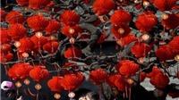 Chùm ảnh: Châu Á tràn ngập sắc màu những ngày giáp Tết