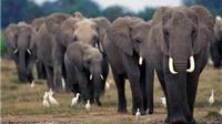 LHQ kêu gọi toàn thế giới nỗ lực chấm dứt tình trạng săn bắt động vật hoang dã