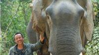 'Cần nghiên cứu kỹ lại đua voi ở Tây Nguyên!'