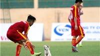 Chó cắn cầu thủ U19 bị thương, bác sỹ phải 'giải cứu'