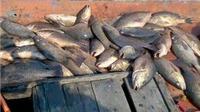 Phó Thủ tướng yêu cầu làm rõ nguyên nhân cá chết bất thường ở biển miền Trung