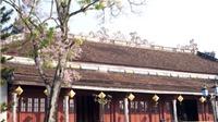 Nhịp điệu Festival Huế 2016: Hoa ngô đồng vẫn nở trên sân Đại Nội