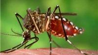 Khoanh vùng nơi ở của bệnh nhân Hàn Quốc nhiễm vi rút Zika tại Việt Nam