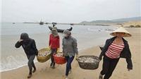 Xử lý vi phạm khi cấp gạo hỗ trợ ngư dân bị ảnh hưởng do hải sản chết bất thường