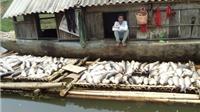 Xử phạt 3 cơ sở gây ô nhiễm môi trường sông Bưởi gần 4 tỷ đồng