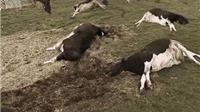 VIDEO: Những sự kiện khủng khiếp nếu tận thế xảy ra