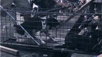 Sao thế giới phản đối Trung Quốc tổ chức lễ hội ăn thịt chó