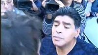 Không chỉ Ronaldo, Maradona, Ibrahimovic và nhiều ngôi sao từng nổi nóng với phóng viên