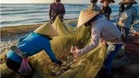Hàng nghìn tấn hải sản tồn kho, doanh nghiệp Quảng Bình 'kêu cứu'