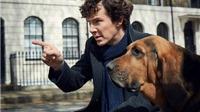 Người hâm mộ Sherlock Holmes nổi điên vì cảm thấy bị lừa