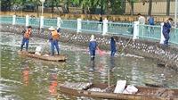 Hà Nội: Trắng đêm xử lý cá chết tại hồ Tây