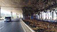 Không chỉ Hà Nội trồng cây dưới gầm đường sắt trên cao