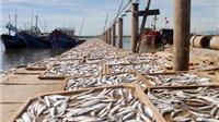 Thị trường không còn hải sản nhiễm độc