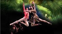 'Kẹp hạt dẻ'- Vở ballet 'phải xem' của các em nhỏ