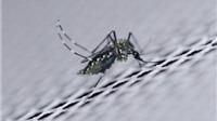 WHO tuyên bố: Zika không còn là tình trạng khẩn cấp toàn cầu