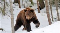 SỐC: Chương trình truyền hình đối mặt cái chết khi bị 'ném' vào rừng taiga Siberia ở -40 độ C