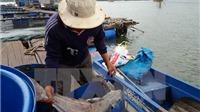 Xả thải gây cá chết: 11 doanh nghiệp phải bồi thường hơn 13 tỷ đồng