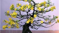Bạn có biết ý nghĩa của hoa đào, hoa mai, hoa cúc, hoa lan... trưng Tết?