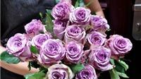 Hoa hồng ngoại 'độc' 'giá khủng' được săn lùng ngày Valentine