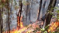 Cháy rừng Đồ Sơn, Hải Phòng, phát hiện thi thể nam giới