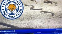 Cộng đồng mạng gọi cầu thủ Leicester là 'rắn độc' vì đột ngột đá hay sau khi Ranieri ra đi