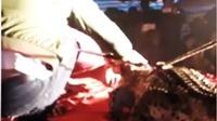 VIDEO: Chui vào… miệng cá sấu, diễn viên xiếc bị cắn rách mặt