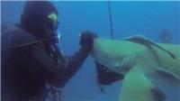 Hy hữu: Cá mập cầu cứu... thợ lặn