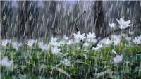 Chữ và nghĩa: 'Nước mưa là cưa trời'
