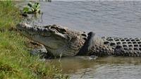 Truyện cười: Cho cá sấu ăn