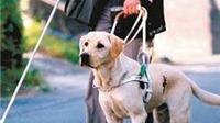 Chó dẫn đường