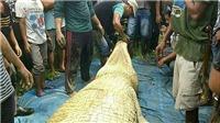 Phát hiện chân tay người trong bụng cá sấu khổng lồ