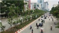 Háo hức chờ hàng phong lá đỏ trổ màu trên phố Hà Nội