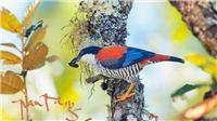 Nhiếp ảnh 'chim' Tăng A Pẩu: Chụp ảnh hơn 500 loài chim để... kêu cứu