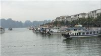 Chủ tịch Hà Nội yêu cầu kiểm tra thông tin 'Thăm vịnh Hạ Long qua hướng Cát Bà: Trò lừa bịp'