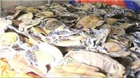 Tuyên án kẻ tàng trữ số lượng lớn xác rùa biển nguy cấp, quý hiếm