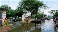 Chùm ảnh: Người dân Chương Mỹ sống chung với rác sau khi nước rút