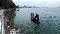 Hà Nội: Thông tin cá chết nổi trắng hồ Tây là chưa chính xác