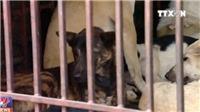 VIDEO: Hà Nội tuyên truyền không ăn thịt chó