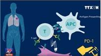 Liệu pháp miễn dịch chống ung thư vừa nhận Giải Nobel Y học đã ứng dụng tại Việt Nam