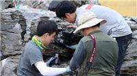 Hàn Quốc phát hiện hàng nghìn con 'kiến sát nhân' tại Ansan