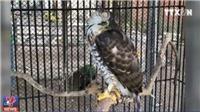 Nuôi động vật kiểu 'ngược đãi, hành hạ': Cơ quan chức năng TP HCM đã vào cuộc