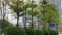 Hà Nội đã gần đạt mục tiêu trồng một triệu cây xanh