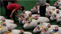 Phiên đầu năm mới ở chợ cá thay Tsukiji: Cá ngừ khổng lồ có giá hàng triệu USD