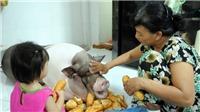 'Nàng' lợn cưng đón Tết Sài Gòn
