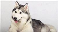 Quy định về việc nuôi chó ở Việt Nam và một số quốc gia