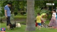 Có thể xử lý hình sự chủ nuôi để chó thả rông cắn chết người